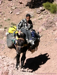 Donkey and Guide, High Atlas Mountains