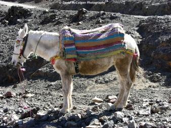 Donkey, High Atlas Mountains
