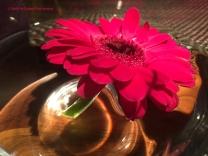 Flower in Water Vase