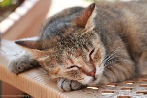 Cat resting at the Upper Barrakka Gardens, Valletta