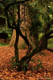 Diana's Grove