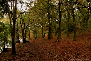 River Tummel Walk