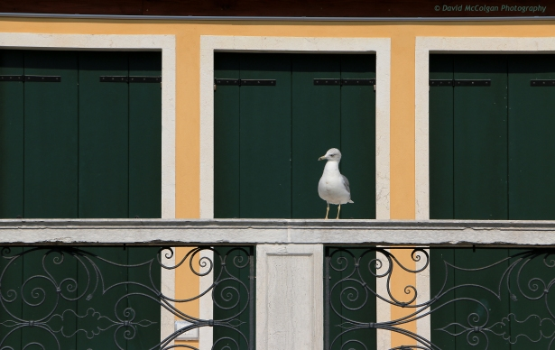Seagull watching the events on Piazza San Marco
