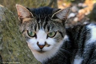 Cat in the Viale Giuseppe Garibaldi
